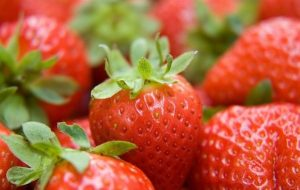 strawberry-730447_960_720-599x381