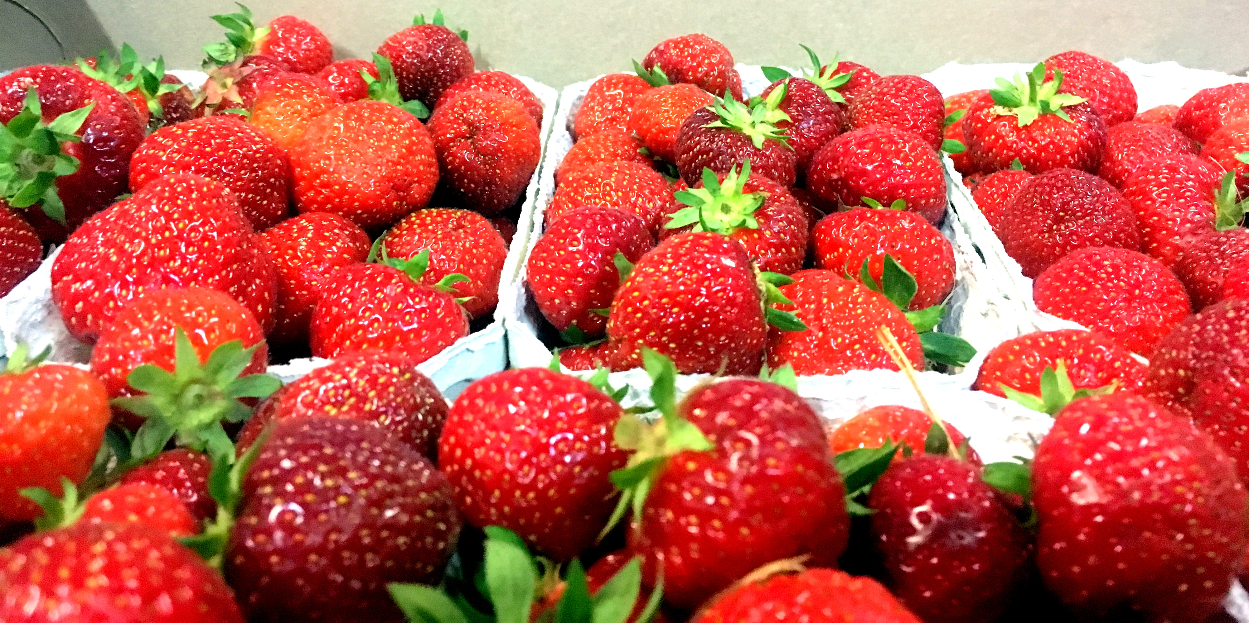 hunsballe_jordbær